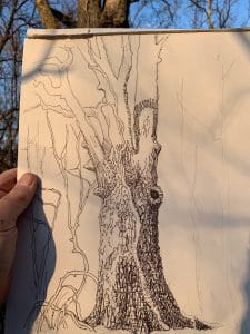 Step 2 of drawing of hackberry tree