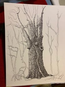 Step three of drawing of hackberry tree