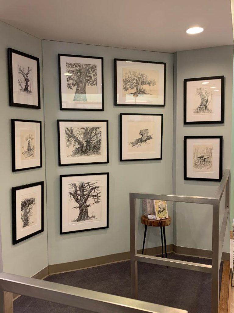 J.R. Hooge Original Illustrations On Display